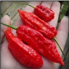 Death Pepper - Ghost (Bhut Jolokia)
